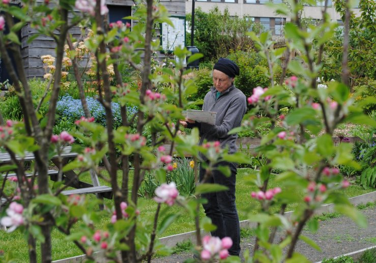 Co-design and drawing workshop for Ninewells Community Garden - Dundee Urban Orchard, May 2016 -1
